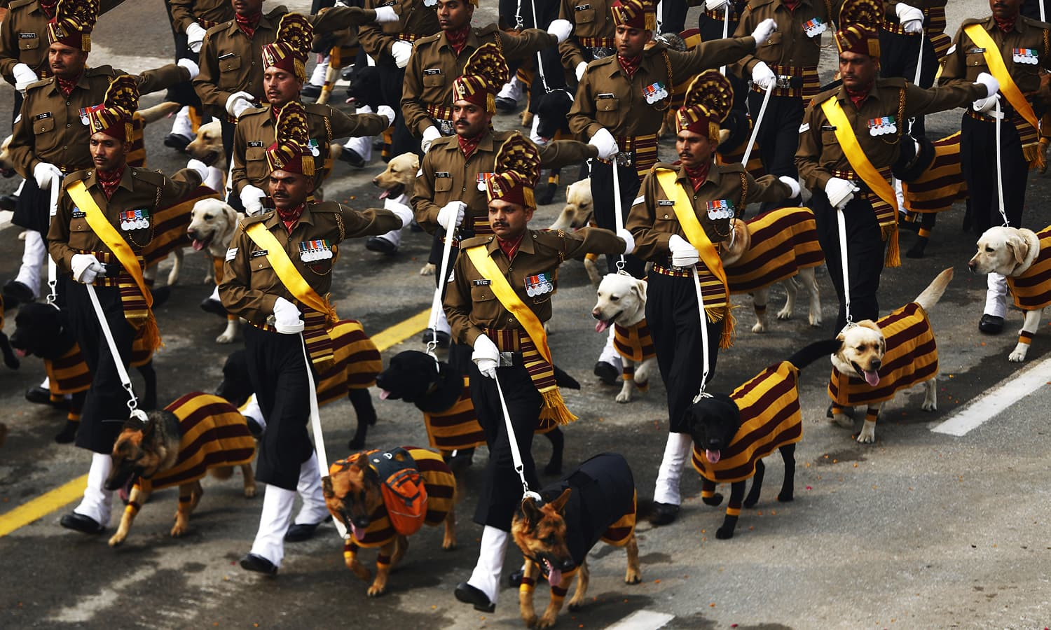Service dogs assigned to the Remount Veterinary Corps Dog Squad march with their handlers during India's Republic Day parade. ─ Reuters