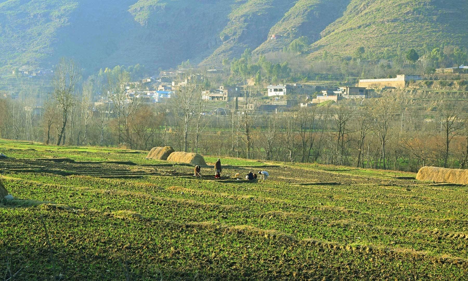 زیادہ تر مقامی لوگوں کا پیشہ کھیتی باڑی ہے.