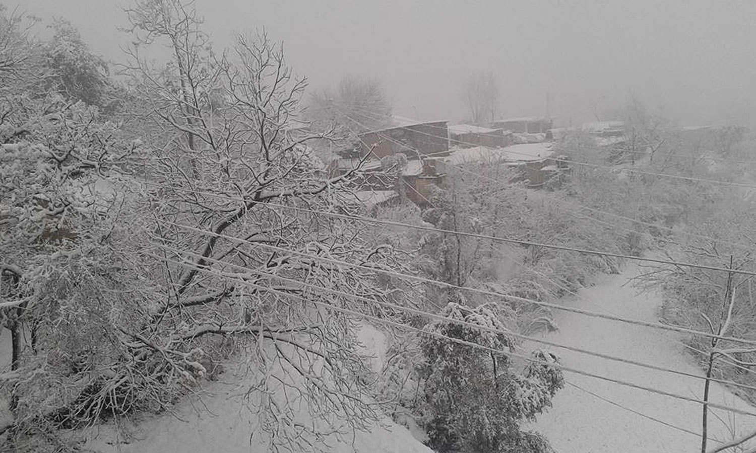 Snow covered trees in Abbottabad. ─ Usman
