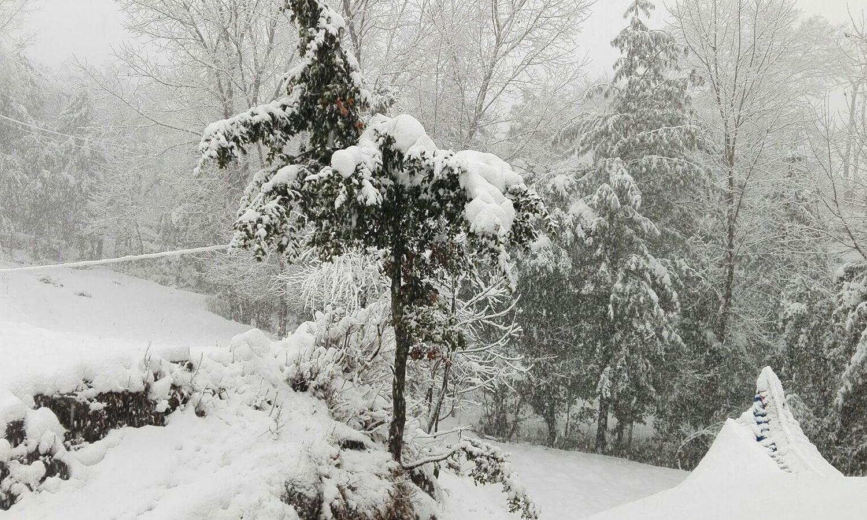 Snow covered trees in Azad Kashmir ─ Manzar Elahi Turk