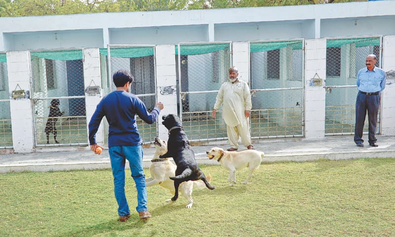 Training, breeding unit for sniffer dogs opens - Pakistan