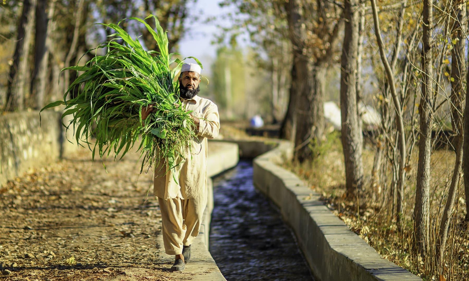 کبل، سوات میں ایک کسان. — فوٹو سید مہدی بخاری۔