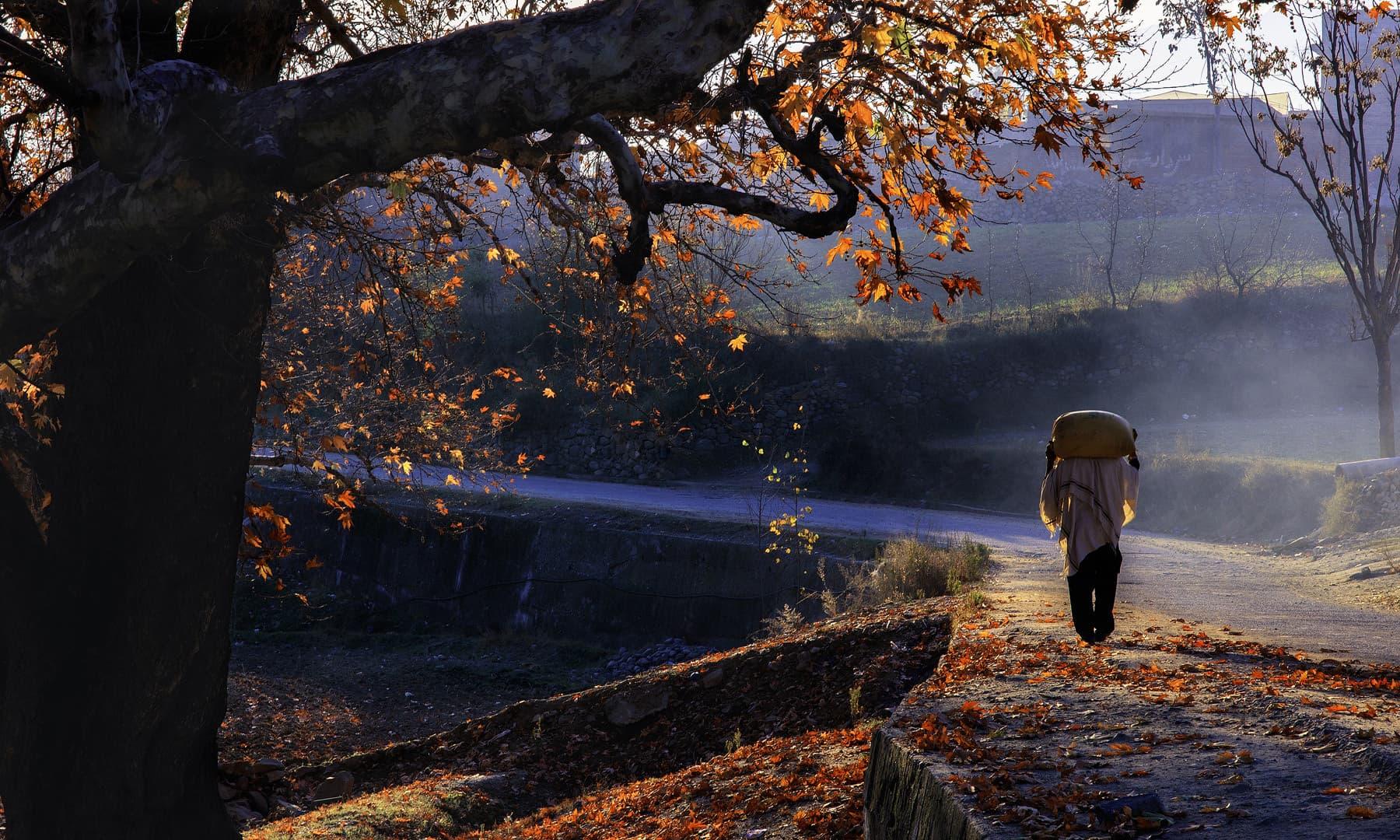 خوازہ خیلہ میں میپل کے درخت کے نیچے. — فوٹو سید مہدی بخاری۔