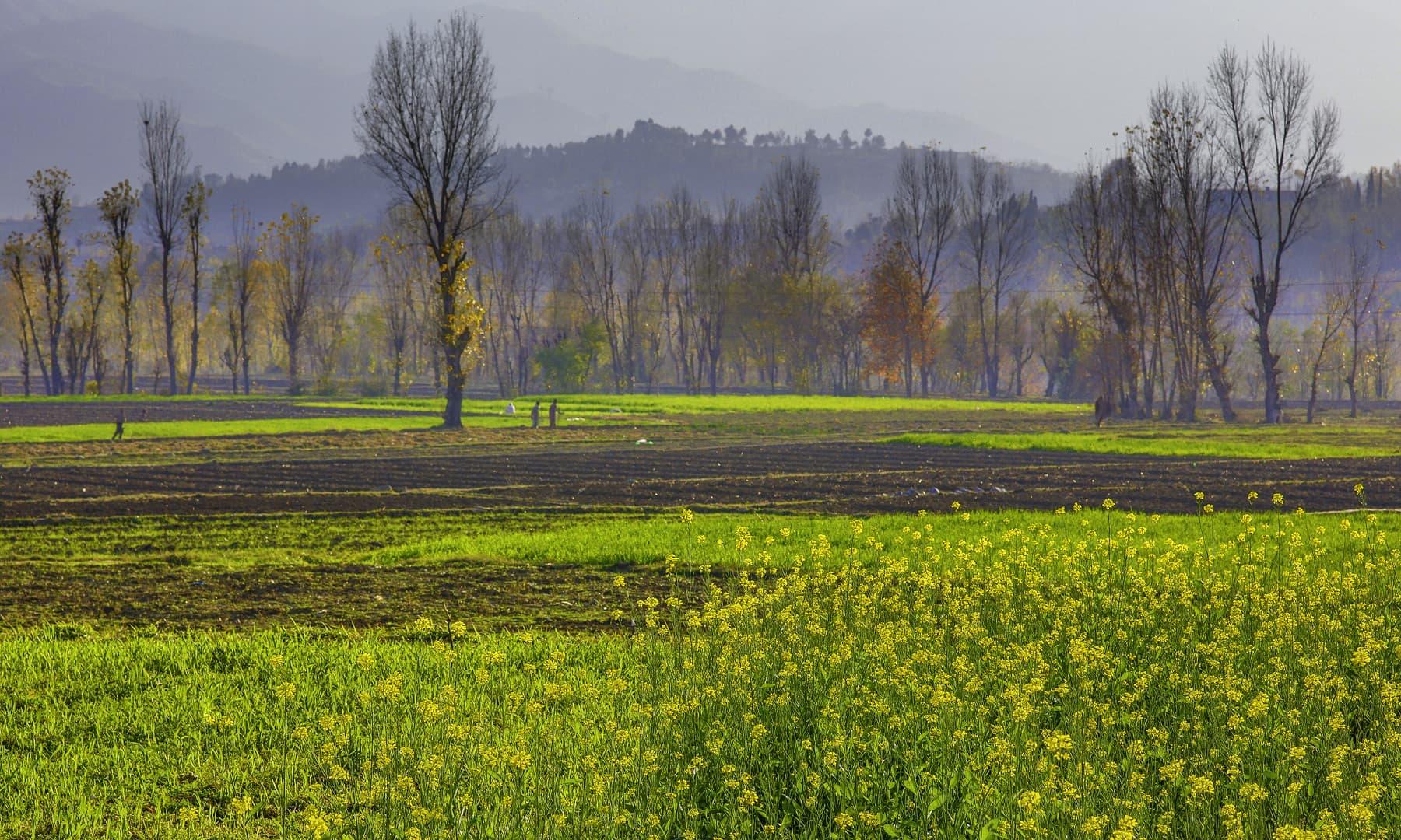 خوازہ خیلہ، سوات. — فوٹو سید مہدی بخاری۔