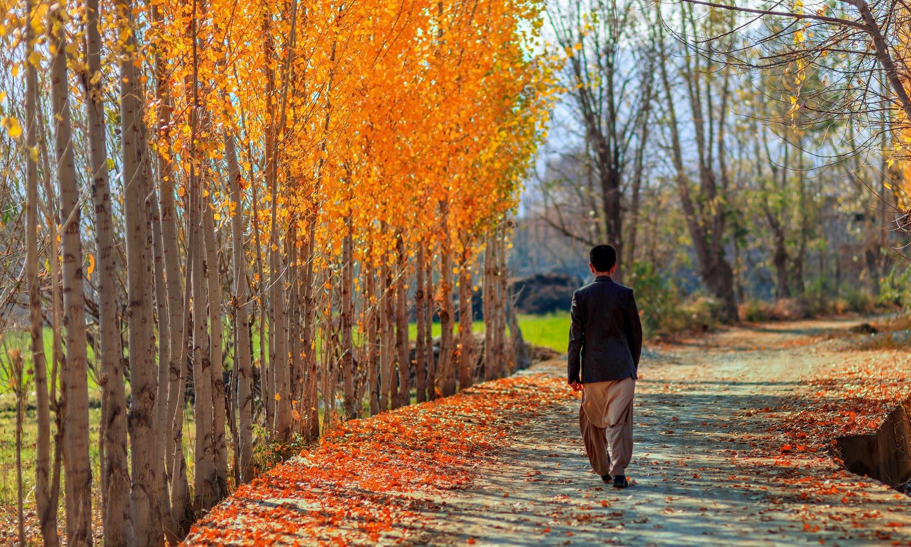گاؤں کا راستہ. — فوٹو سید مہدی بخاری۔