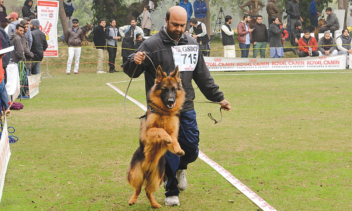 German Shepherd Dog Show In Lahore