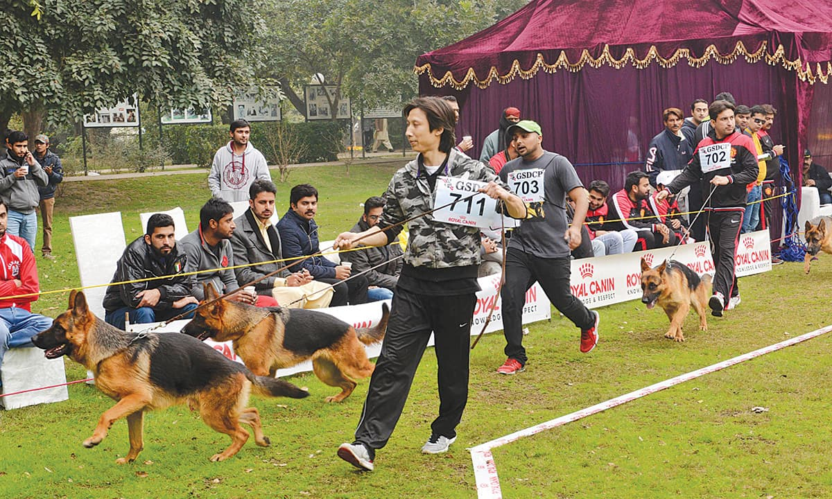 Dog day afternoon: The growing popularity of canine