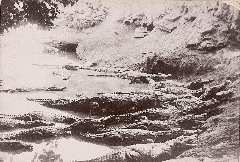 مزار 1910 میں۔