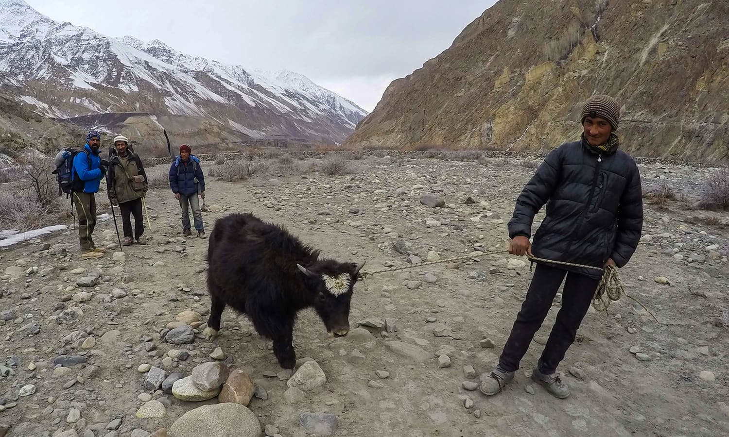 Shimshal tales: taking a little yak off to their home.— Photo by author