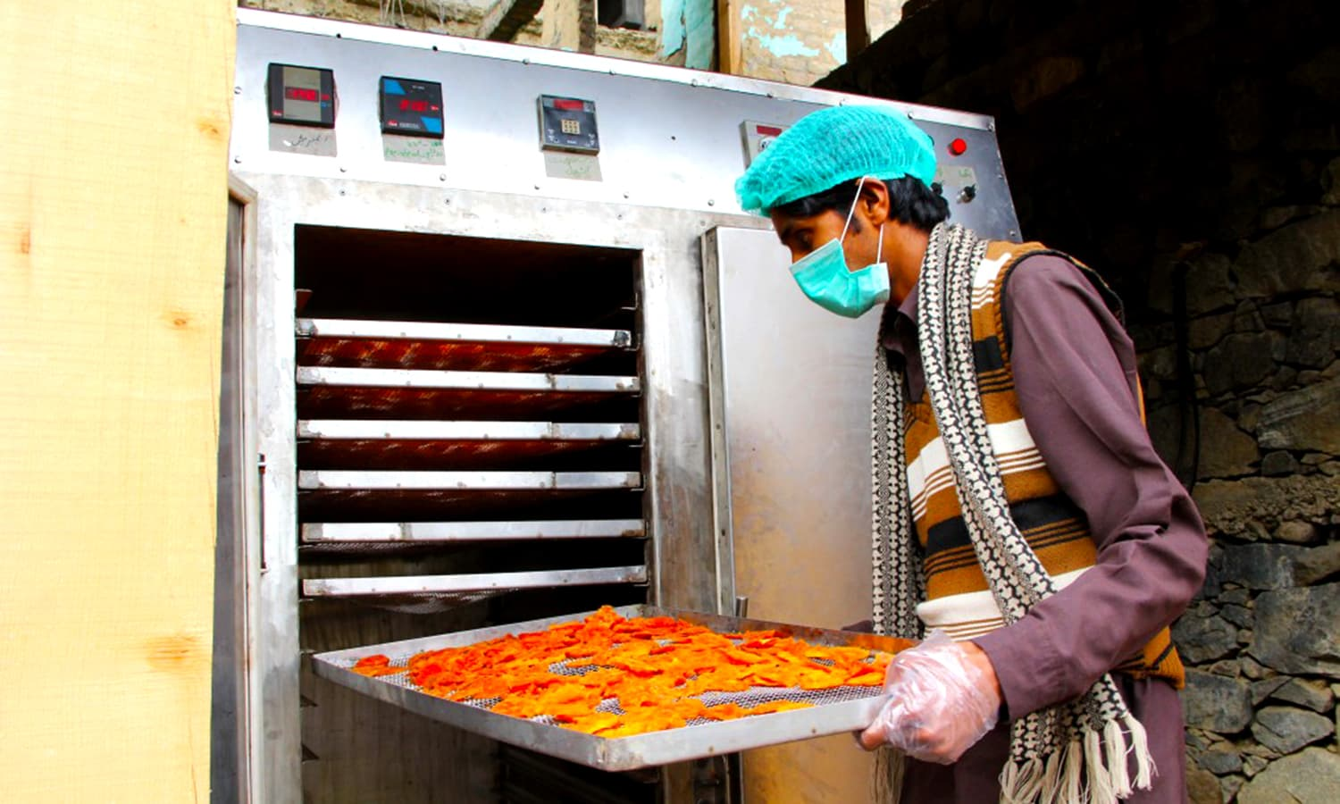 Farmer unloading dried persimmons from an electric dryer in Peochar, Swat. ─ Photo by Sarhad Rural Support Programme
