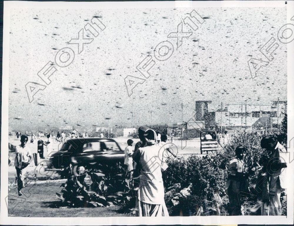 A locust attack in Karachi (1961).