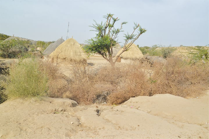 Most residents still live in cone-shaped huts: a view of a village in Thar -Photos by Faisal Mujeeb / White Star
