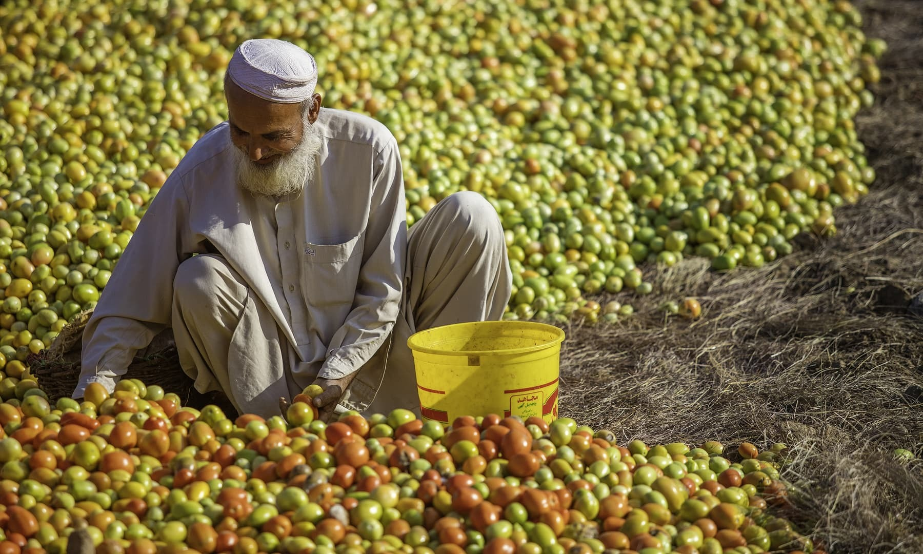 Khazta Baz Khan working in his field.