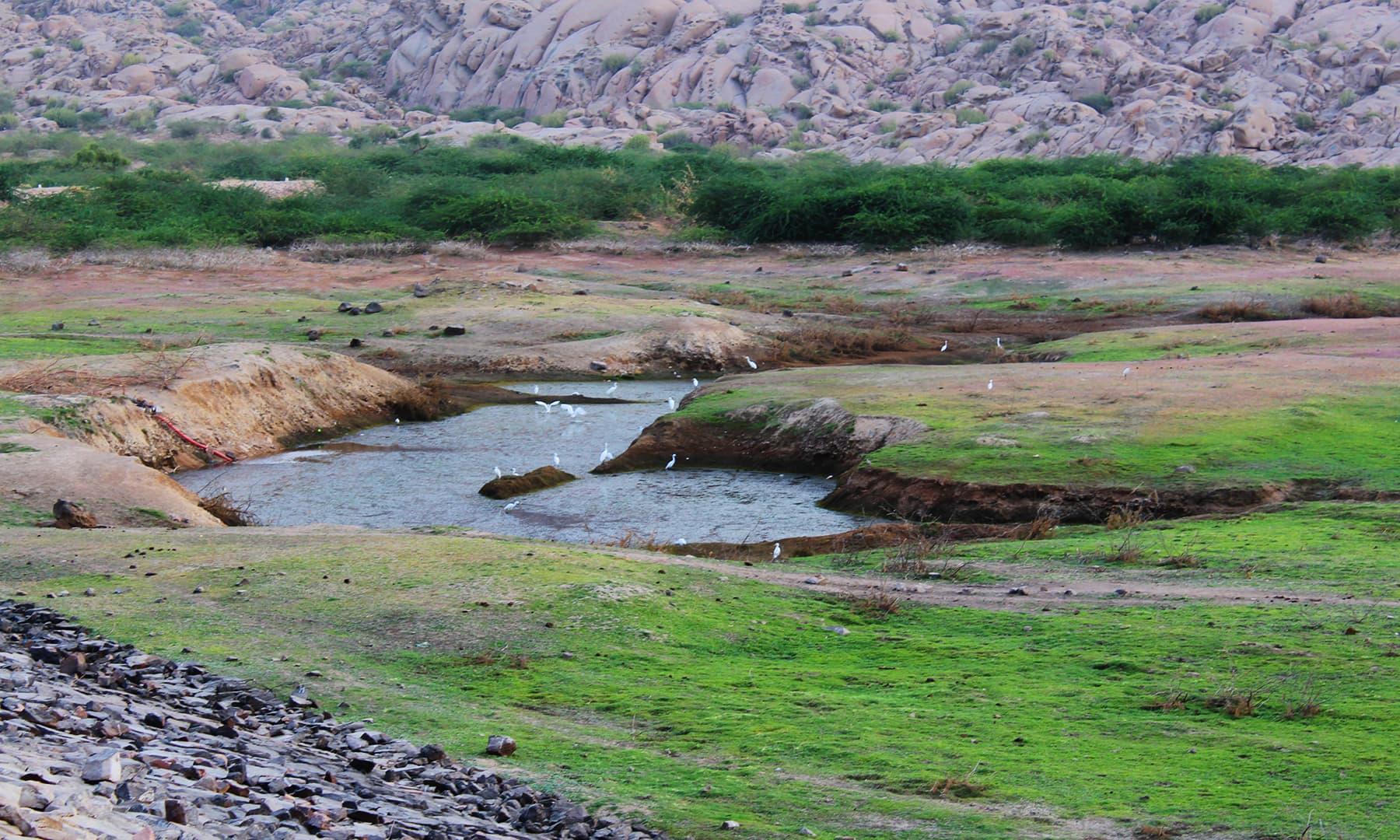 کارونجھر پہاڑ کا علاقہ بارش کے بعد سبز و شاداب ہو جاتا ہے— فوٹو اختر حفیظ۔