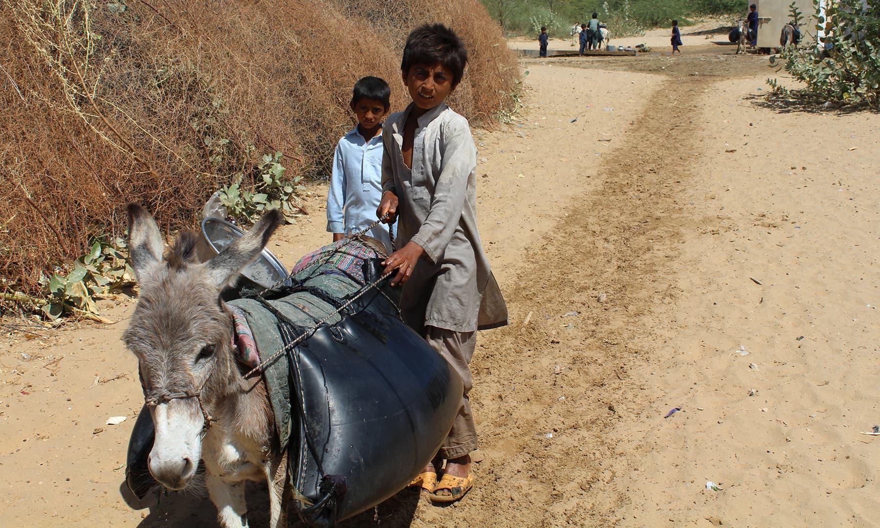 تھر میں چھوٹے بچے پانی گدھوں پر لاد کر اپنے گھروں کی طرف لے جا رہے ہیں۔— فوٹو اختر حفیظ۔