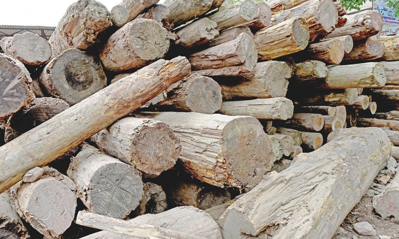 Logs kept in the courtyard of a timber shop. Most wood arrives from the country's northern areas. Some wood is also imported from China as it is cheaper.