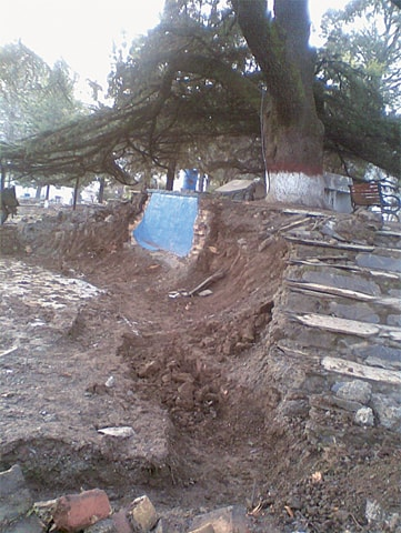 Digging around centuries-old cedar of Lebanon in Lady Garden