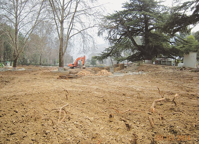 March 9, 2014: The bulldozed parts of Lady Garden. The roots of these centuries-old trees have seriously been damaged due to the digging.