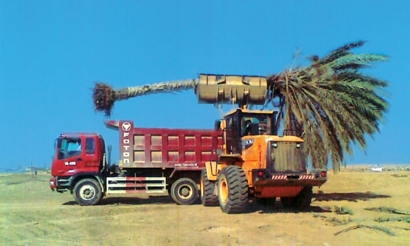 One of many fully grown date palms is hauled away from Noor Mohammed goth's agricultural land.