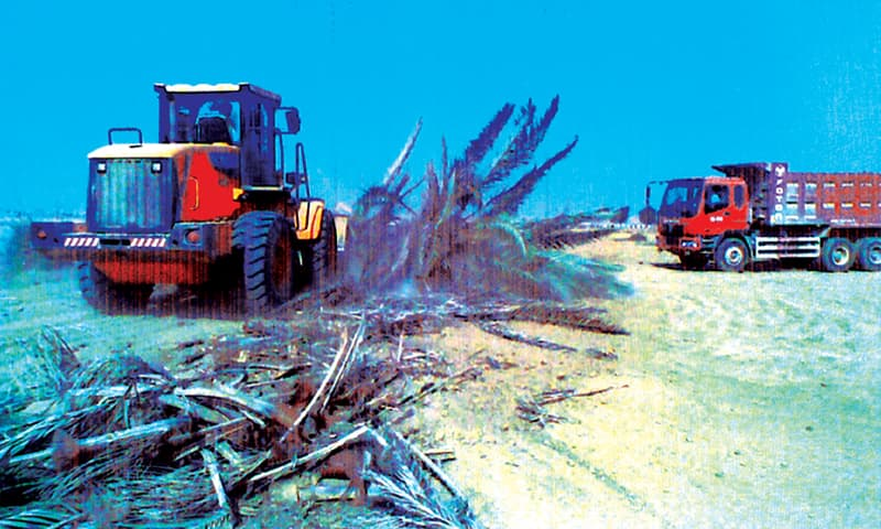A wheel loader tears down rows of date palms.