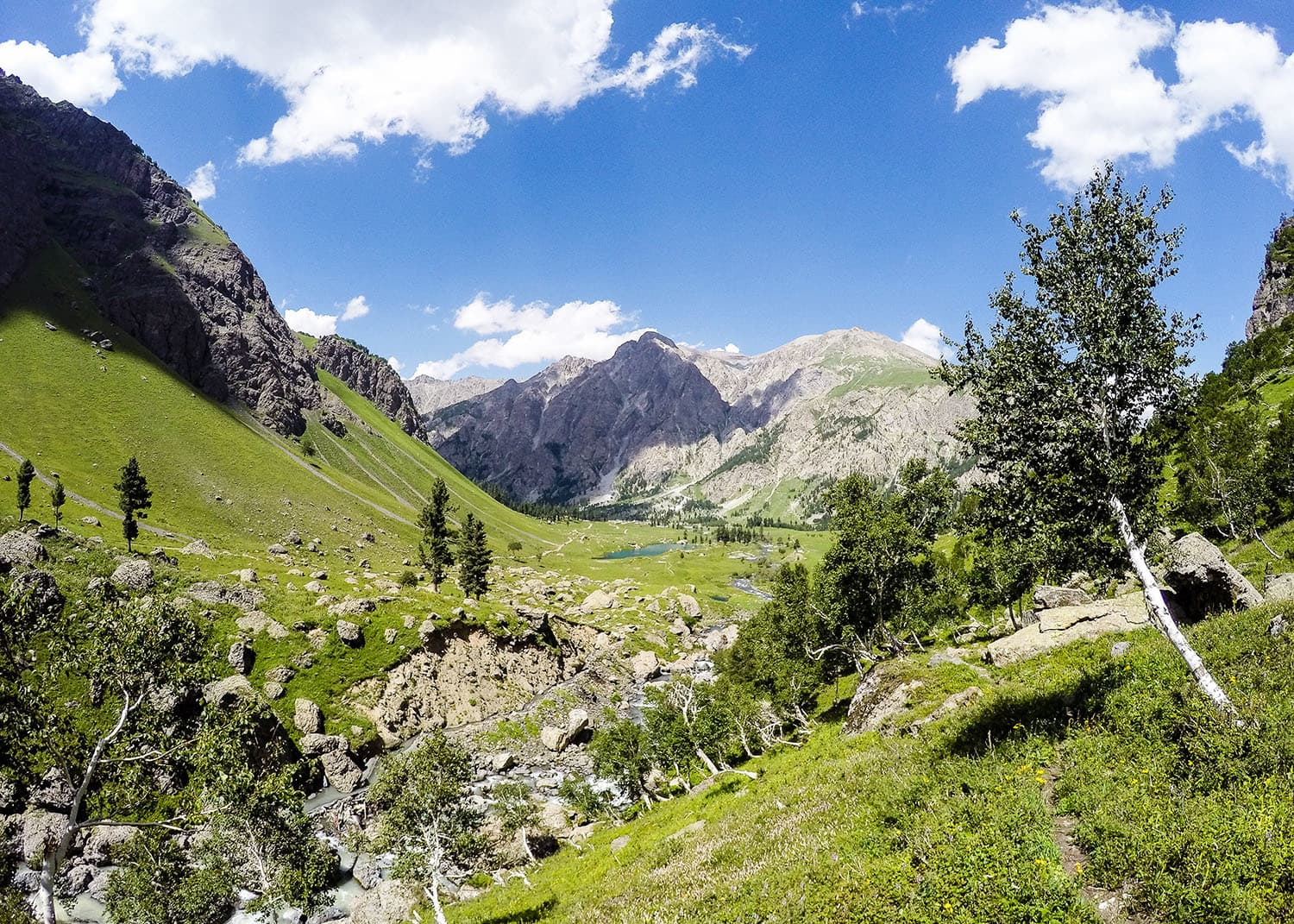Birchtrees are found all over Minimarg and Domail and are used to make paper.