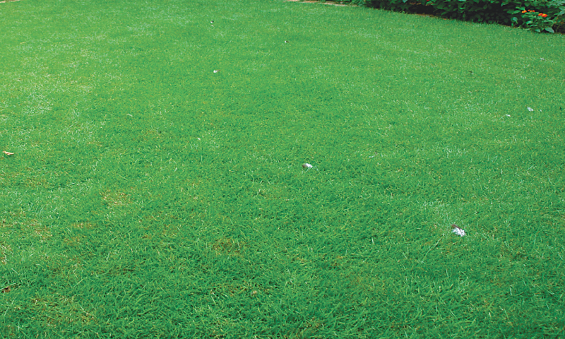 Lush green lawns guzzle incredible amounts of precious water / Photos by the writer