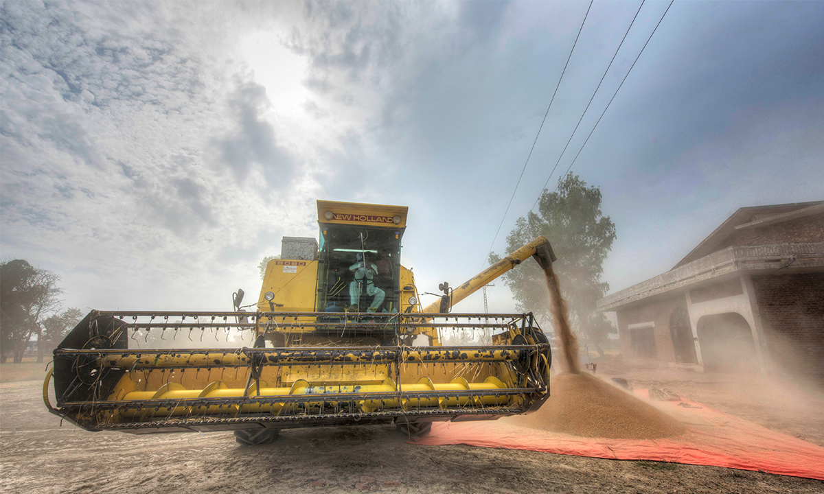 A combine harvester empties harvested wheat | Saad Sarfraz Sheikh
