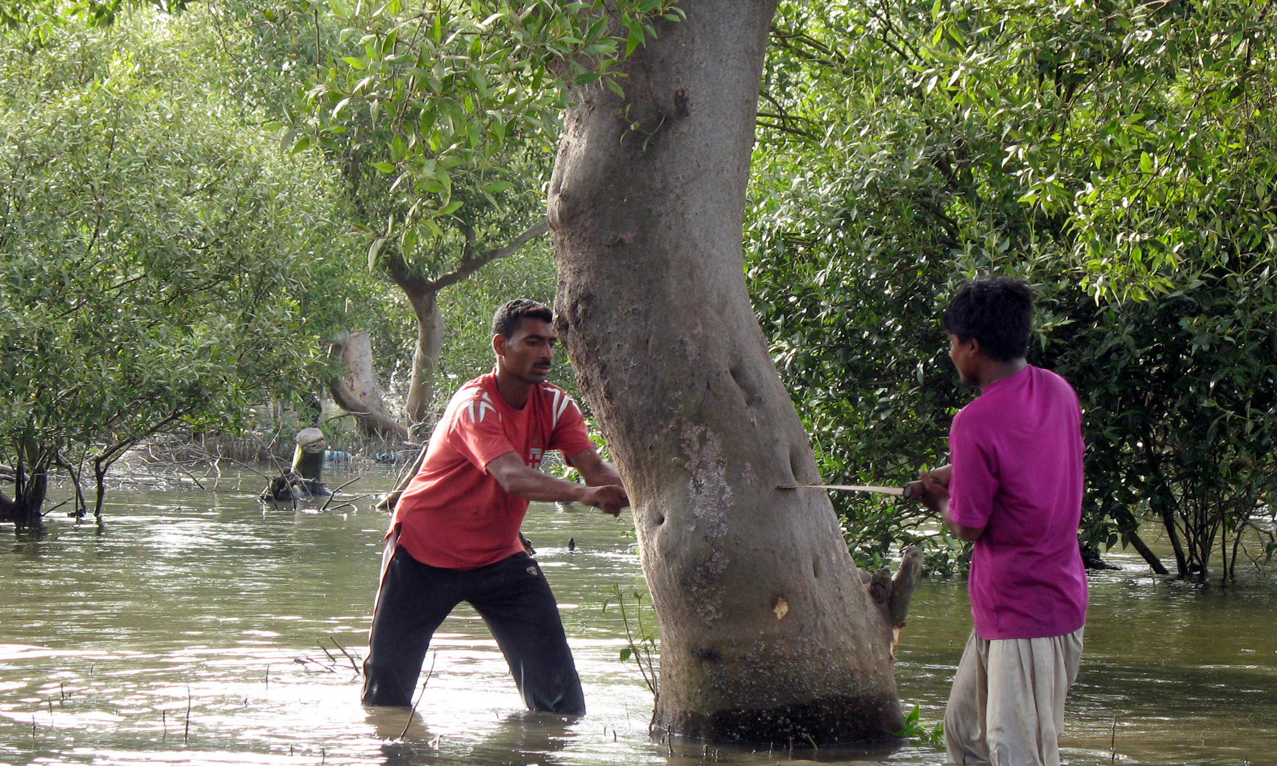 Workers cut mangrove trees near Baba Island off Karachi's coast