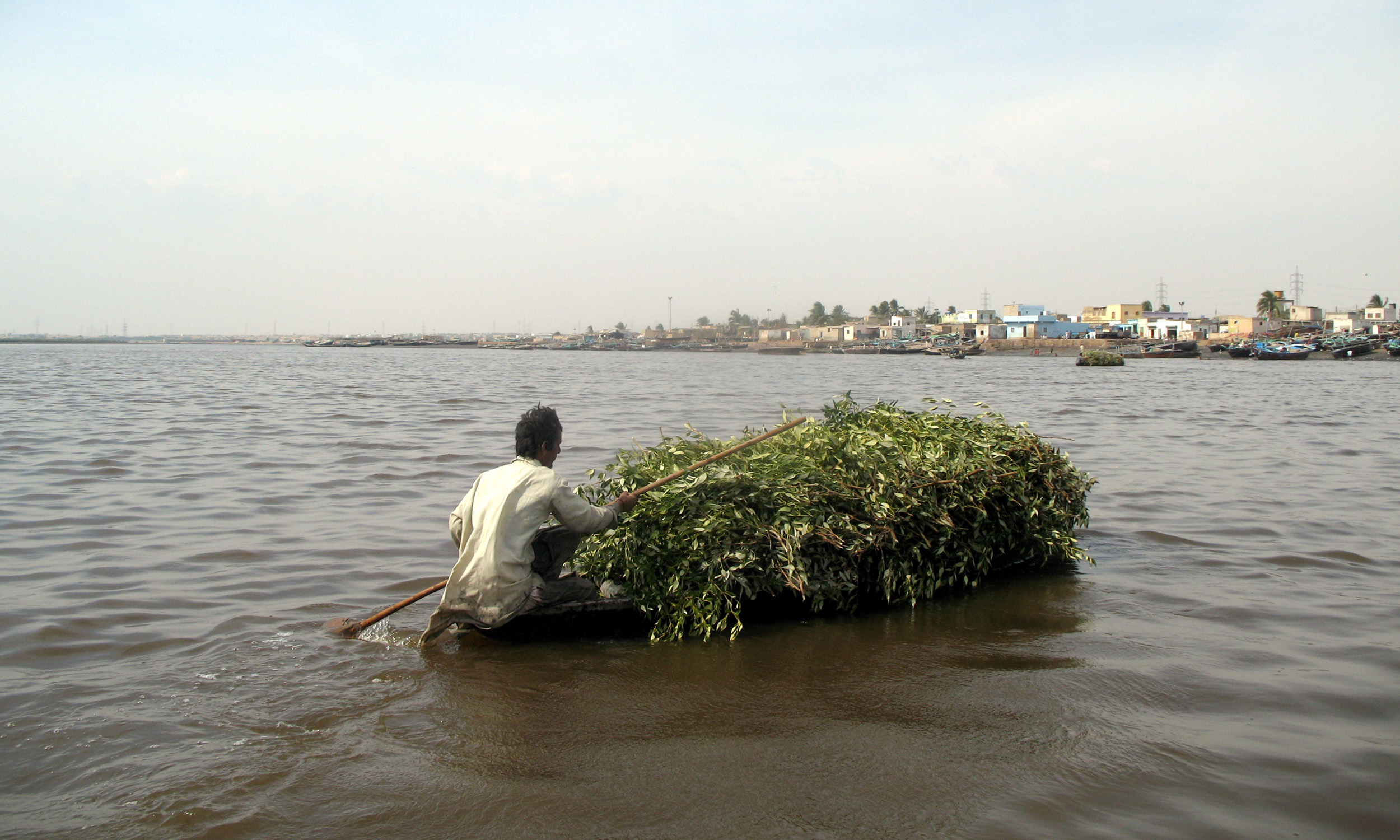 A resident of Rehri Goth takes back mangrove branches to his village
