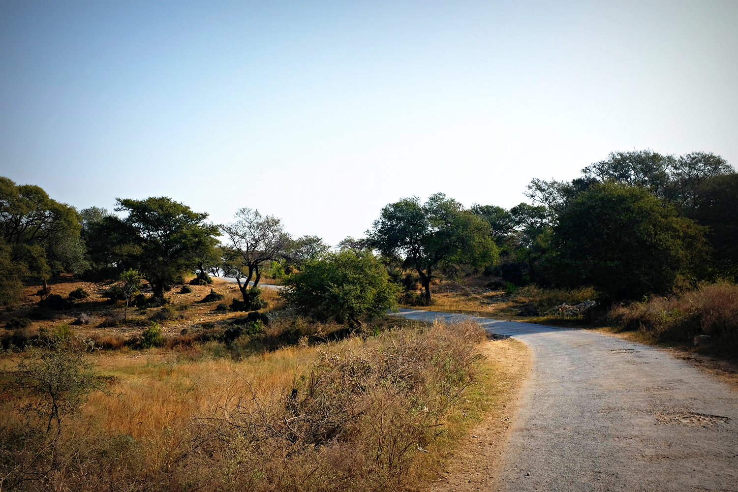 The scenic landscape makes driving through Potohar a memorable experience.