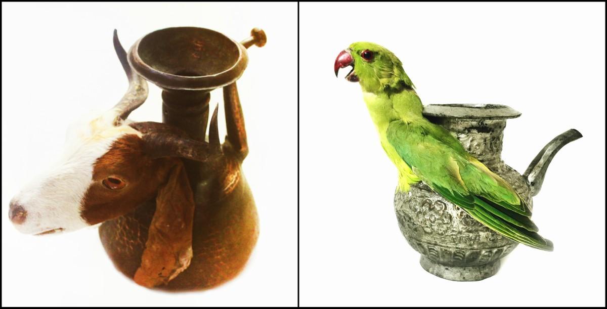 Goat of Surahi, Affan Baghpati, metal, fiberglass & taxidermy, variable, 2016 | Parrot on Lota, Affan Baghpati, metal, fiber & taxidermy, variable, 2016