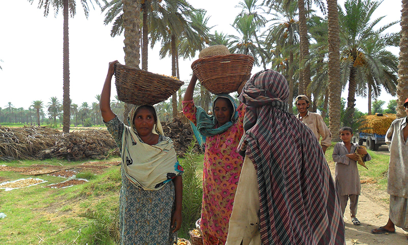 Women workers are underpaid in Pakistan, although the situation is no better in other countries of the region. —photo by author