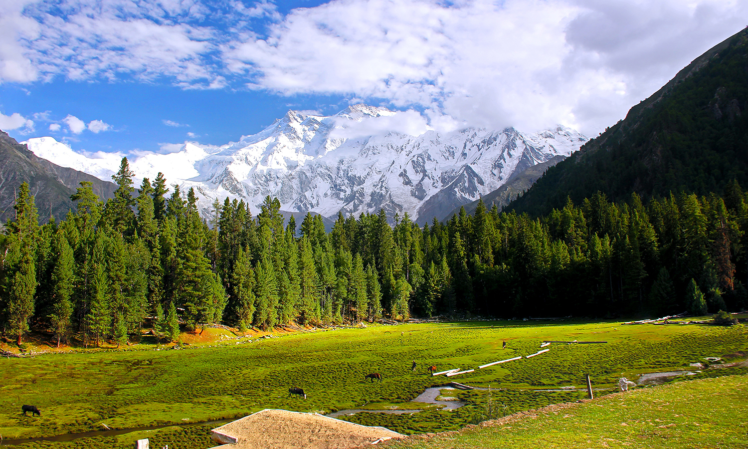 Nanga Parbat, Diamer. — Photo by M. Awais