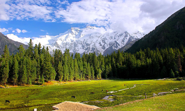 Nanga Parbat, Diamer. — Photo by M. Awais