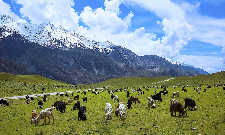 Chitral National Park. — Photo by Tahsin A Shah