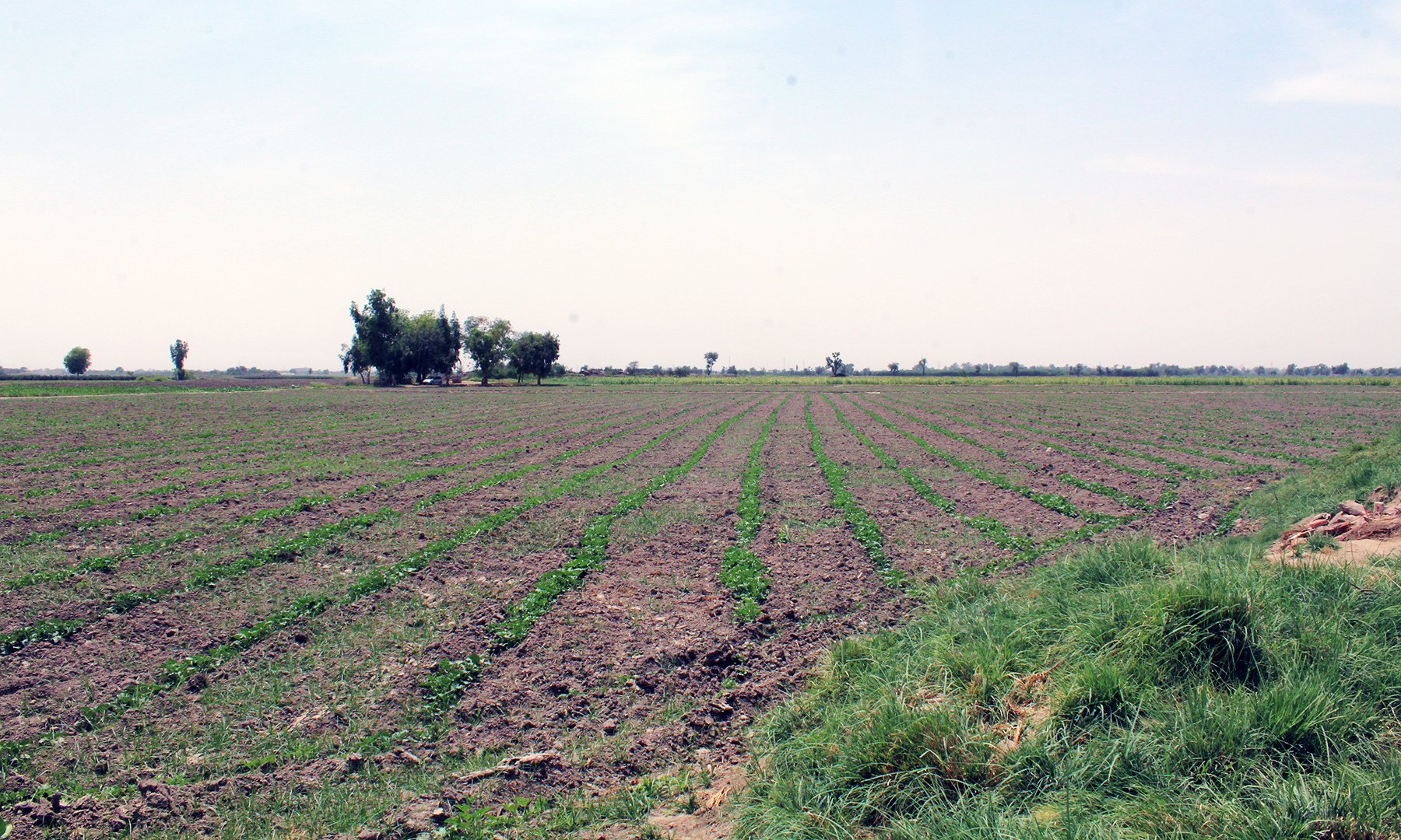 میانی اور دوبے والی جنگوں کا میدان جنگ جہاں اب لہلہاتے کھیت نظر آتے ہیں — تصویر اختر حفیظ