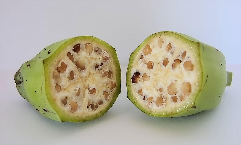 ہمارے پسندیدہ پھل اور سبزیوں کی اصل شکل کیسی تھی؟