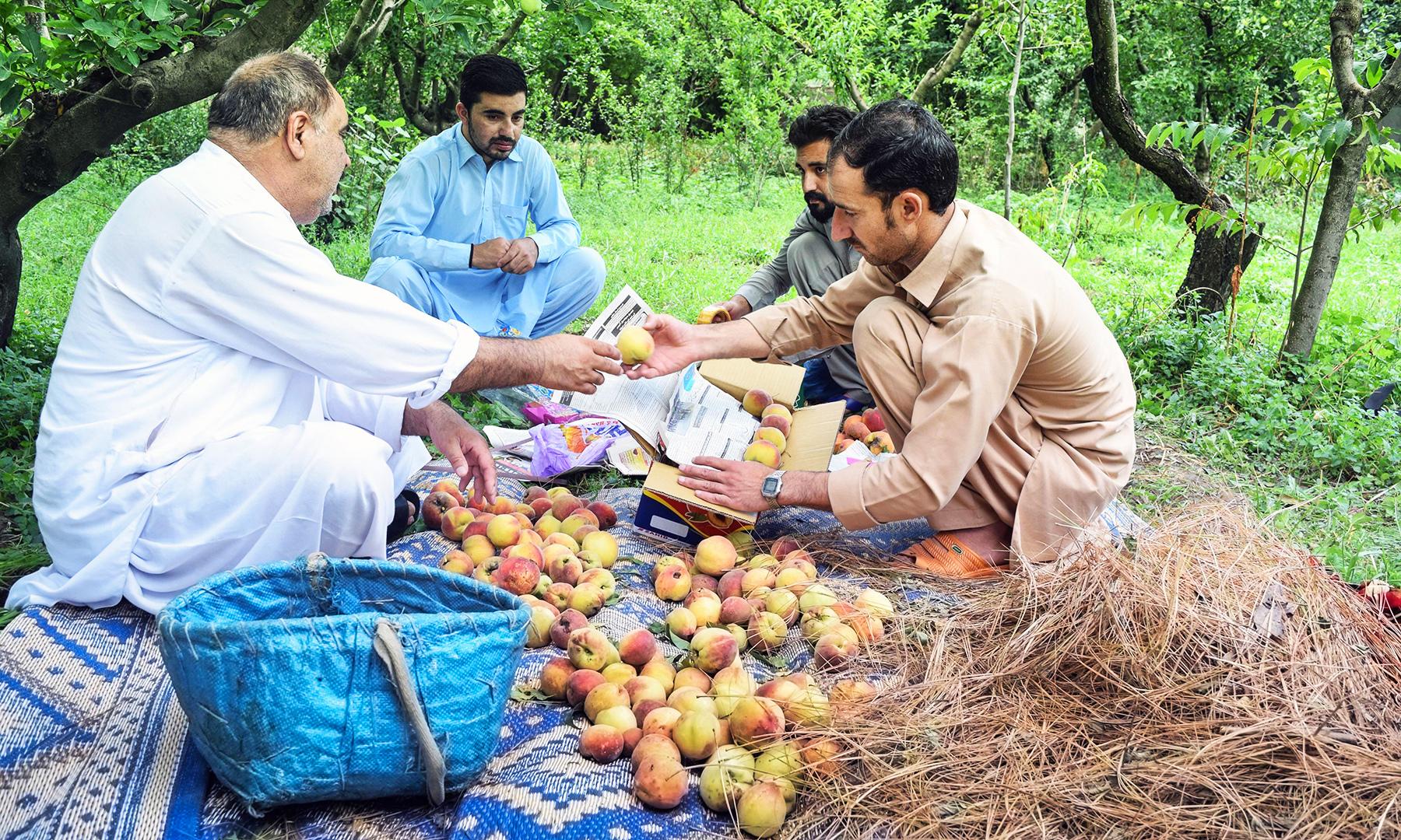 کریٹ ساز اپنے کام میں مصروف ہے — تصویر امجد علی سحاب