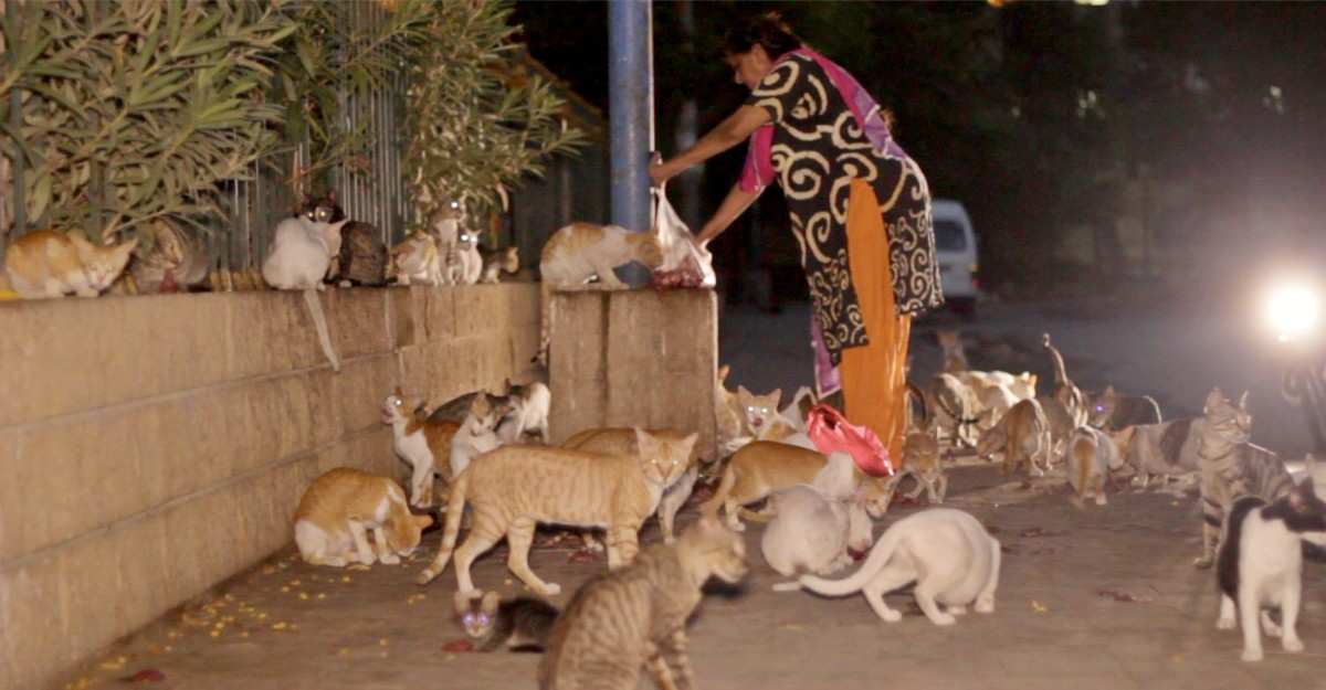 The sight of a hungry cat kick-started this extraordinary woman's mission to keep her neighbourhood's cats well-fed