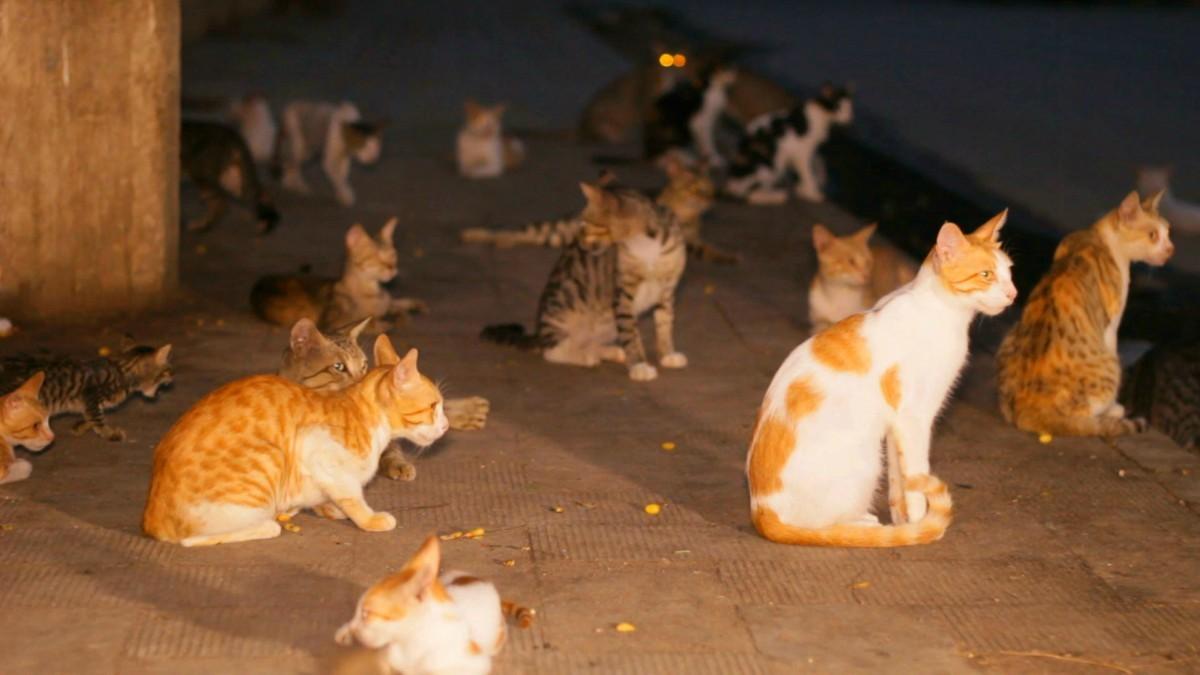 compressed air cat training