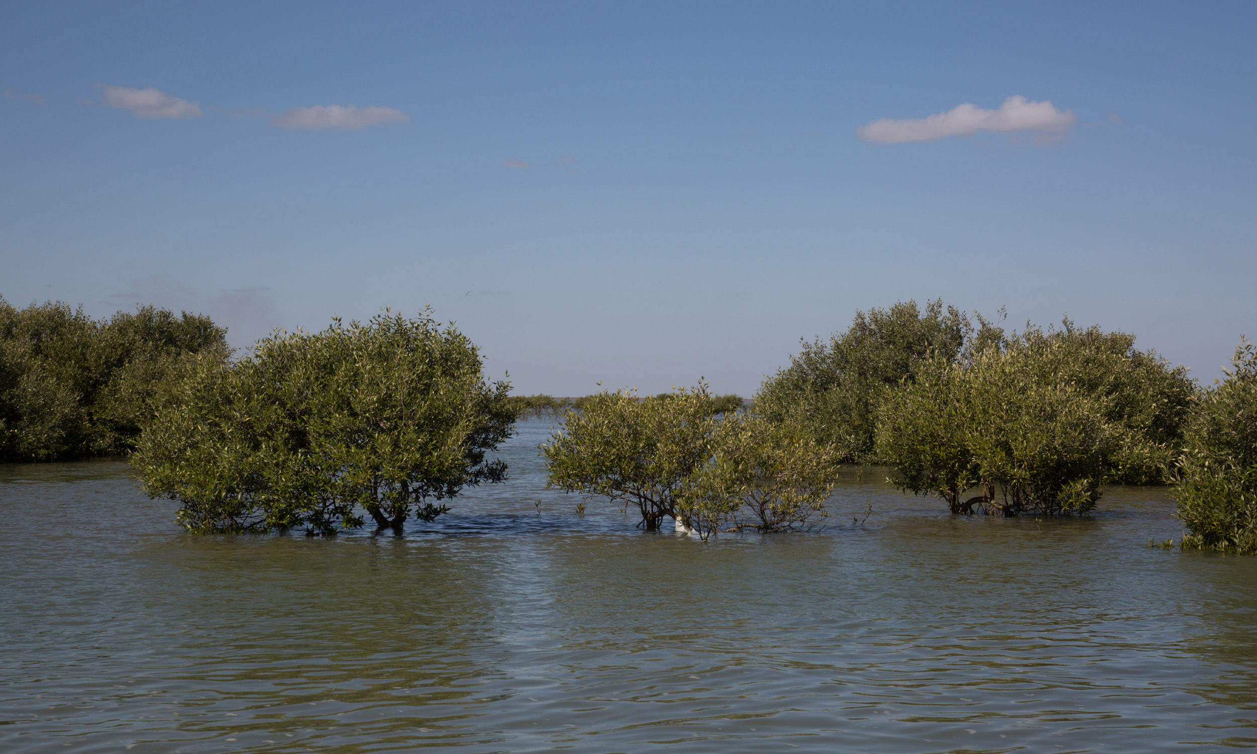 The Mangroves of the Arabian Sea