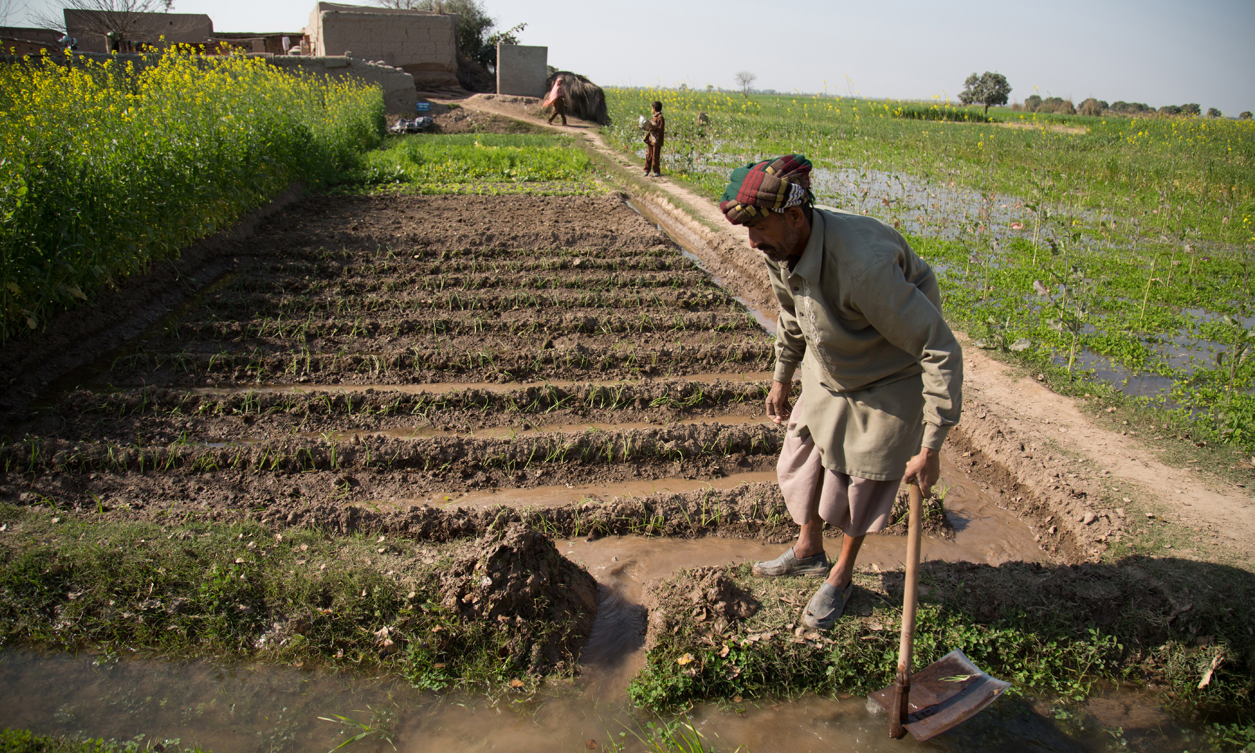 A farmer waters his vegetables in Samti village, Muzaffargarh district
