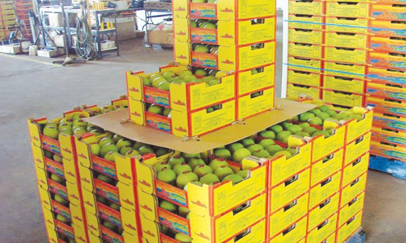 What makes exports unviable is the fact that mangoes have to be irradiated  at the US facilities, which involves booking and trucking the cargo to a particular facility, completing the irradiation process and taking it back to the market.