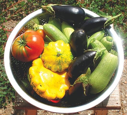 Bowl full of summer vegetables