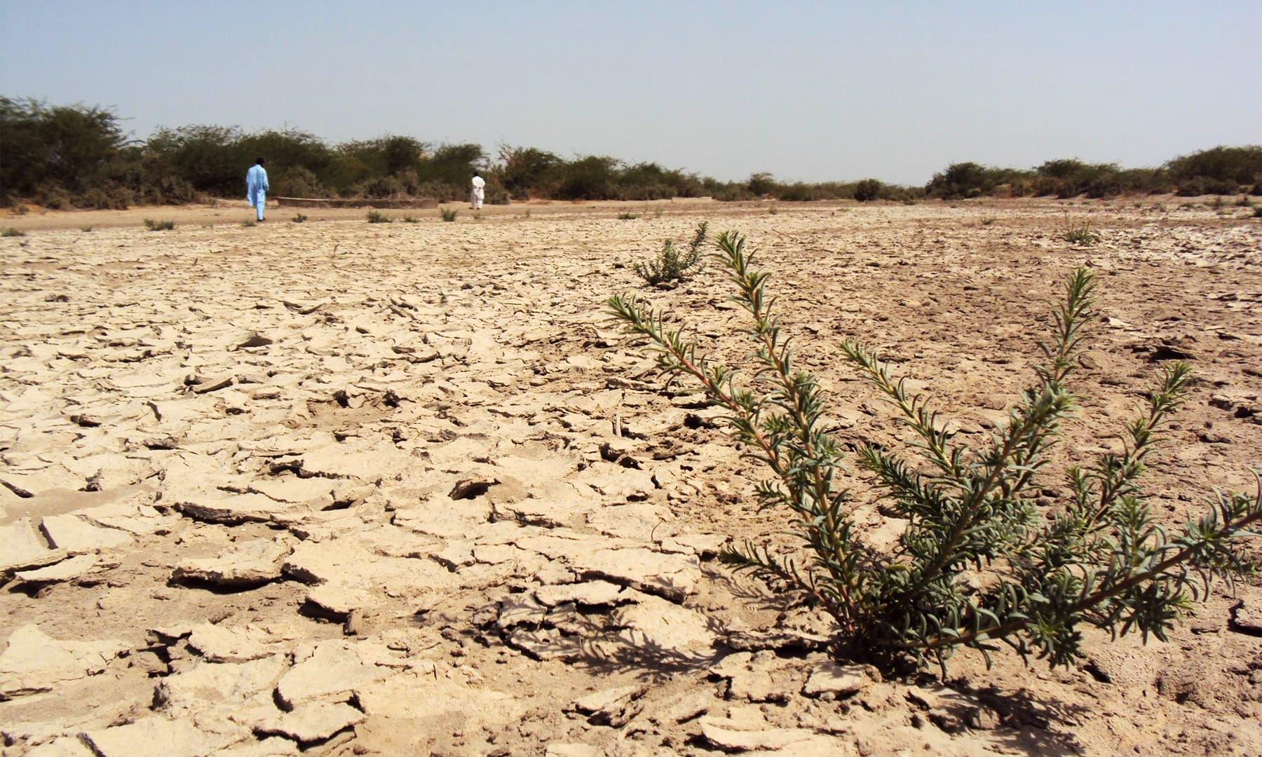 انڈس ڈیلٹا پر واقع ایک علاقے کی تصویر — تصویر ابوبکر شیخ