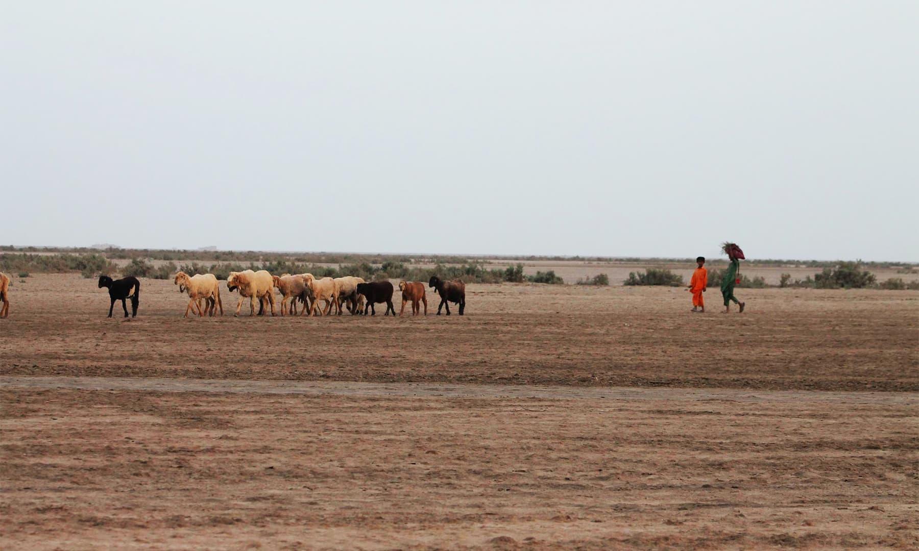 اب ڈیلٹا کے علاقوں میں پانی کہاں — تصویر ابوبکر شیخ