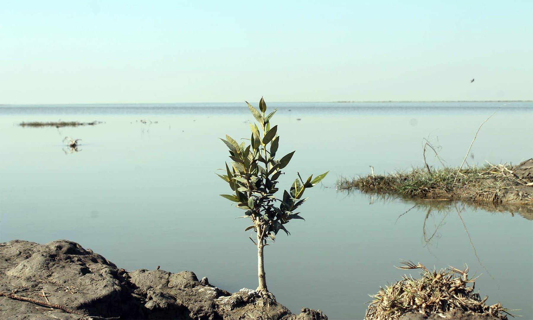 جھیلوں میں سمندر کے پانی کی آمد — تصویر ابوبکر شیخ
