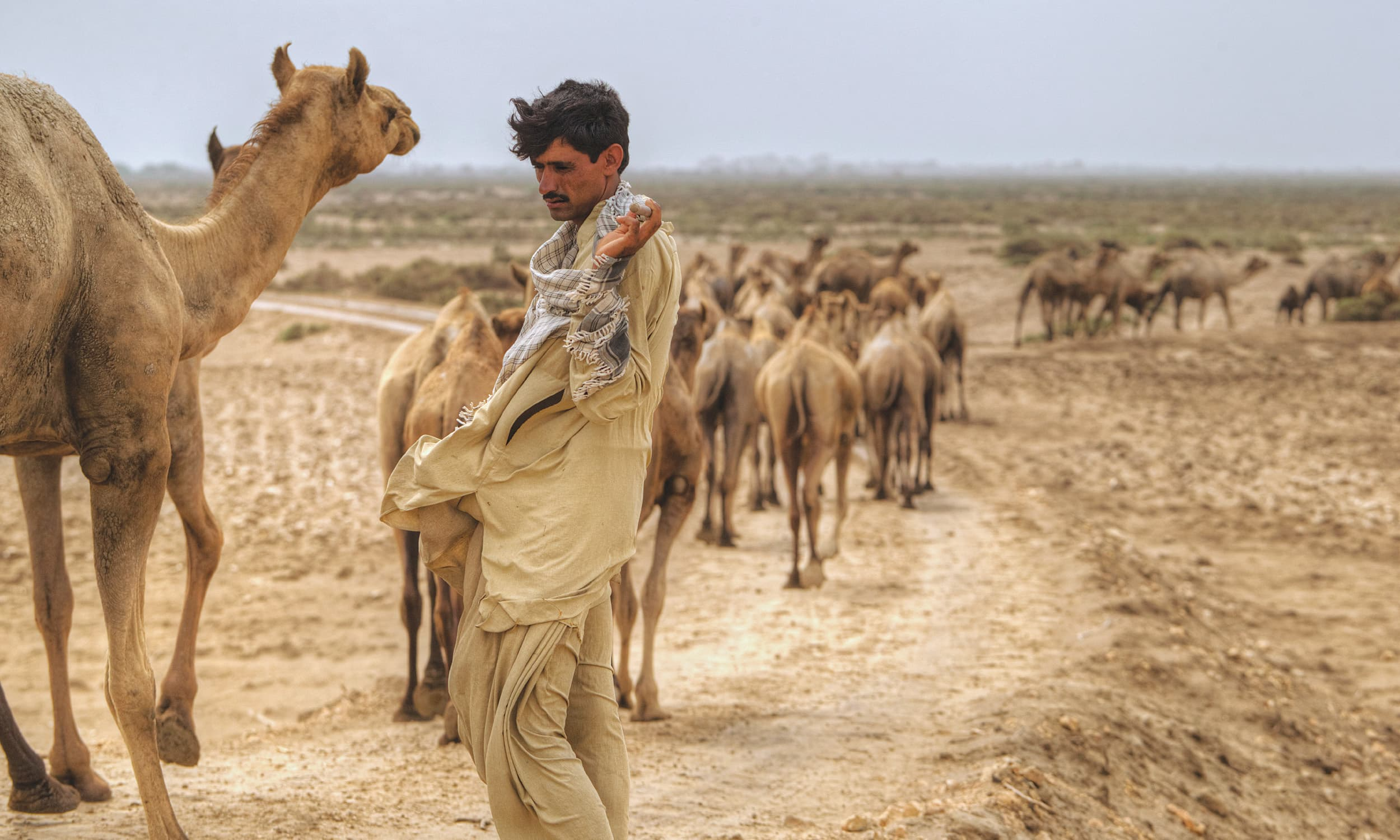 A lone camel herder appears out of a sandstorm on the edge of Marho Kotri Wildlife Sanctuary on the Sindh coast | Kohi Marri
