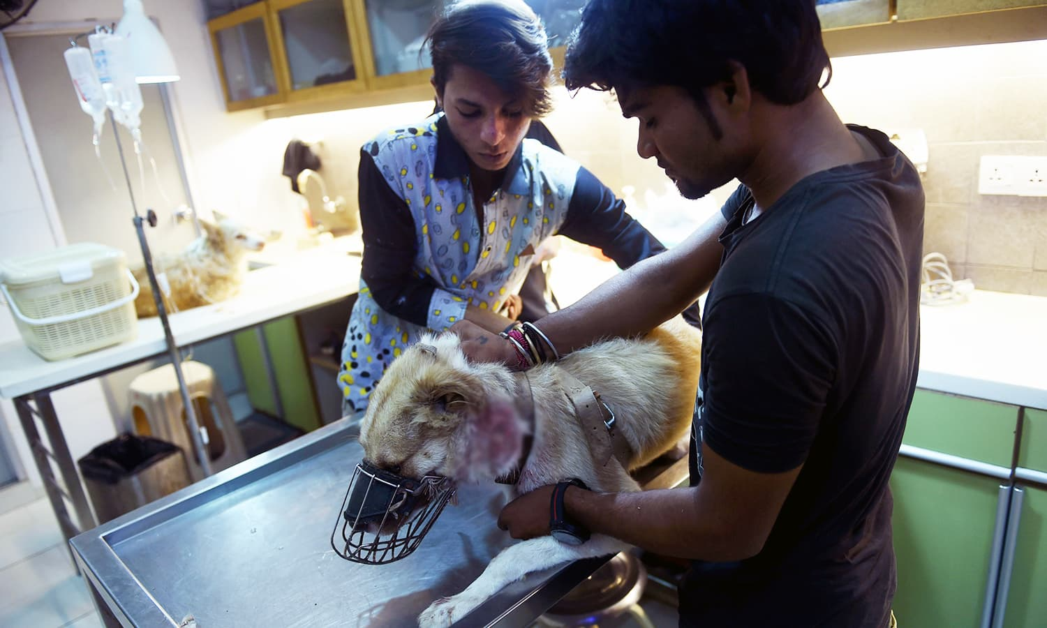 In this photo taken on August 16, veterinarians give treatment to a dog at the Animal Care Centre. — AFP