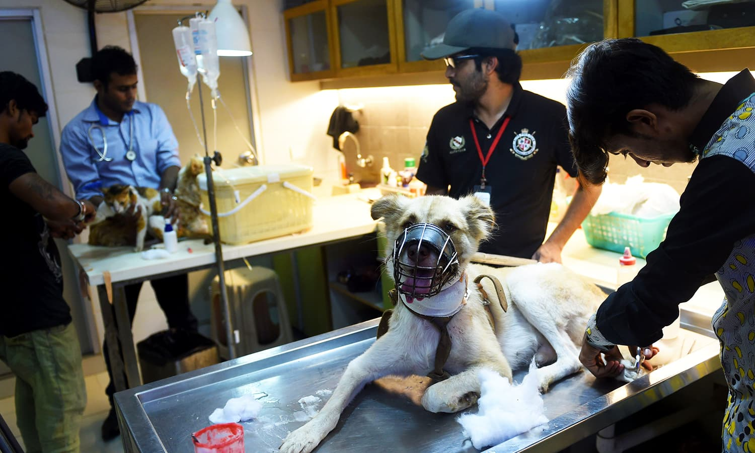 Veterinarians give treatment to a dog at the Animal Care Centre.— AFP